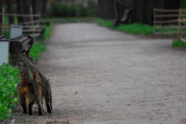 Кошачьи гуляния. Фото