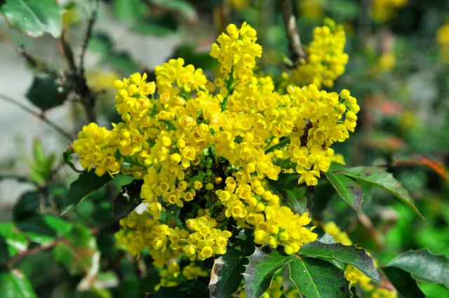 15 декоративных растений для обрезки в мае