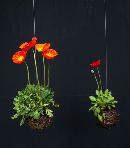Парящие цветы