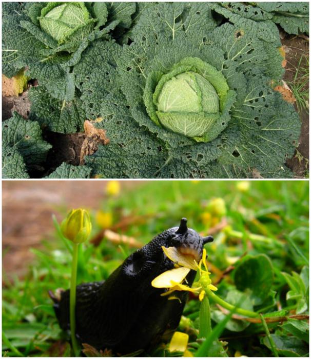 Средство для защиты растений от вредителей.