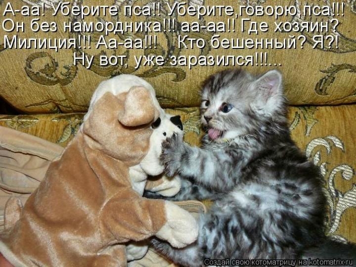 2017, картинки с прикольными надписями с котятами