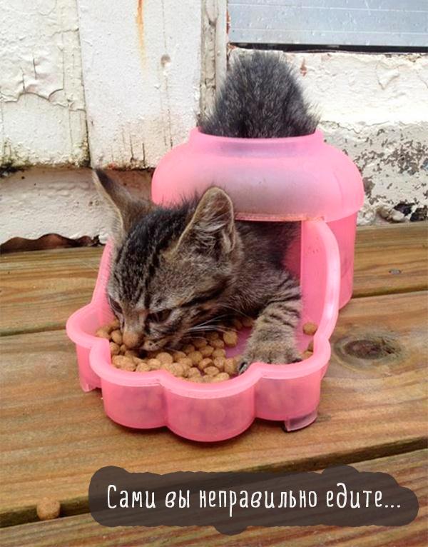 котенок есть смешно из миски