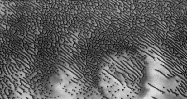 Признаки жизни на снимках НАСА с Марса (12 фото)