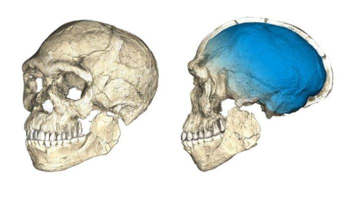 Человеческий череп.