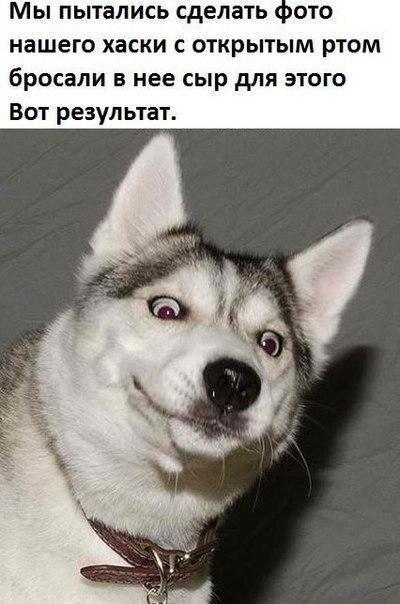 Собако-пост (32 фото)