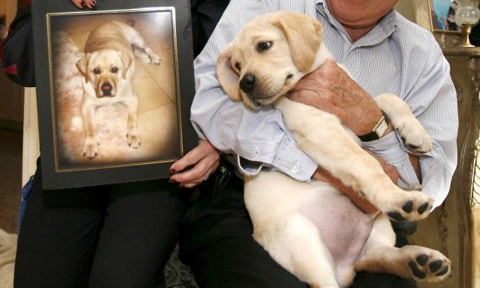 Первая клонированная в мире собака. | Фото: dailymail.co.uk.