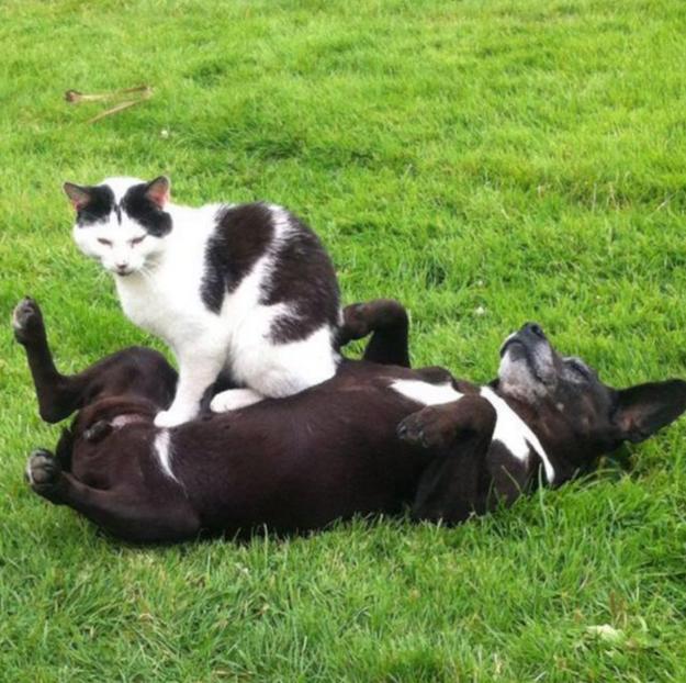 кошки которые сидят где хотят