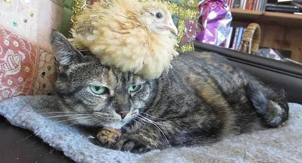 Живая шляпа животная мода, животные, животные и люди, коты, показ мод, смешно, фото, шляпки