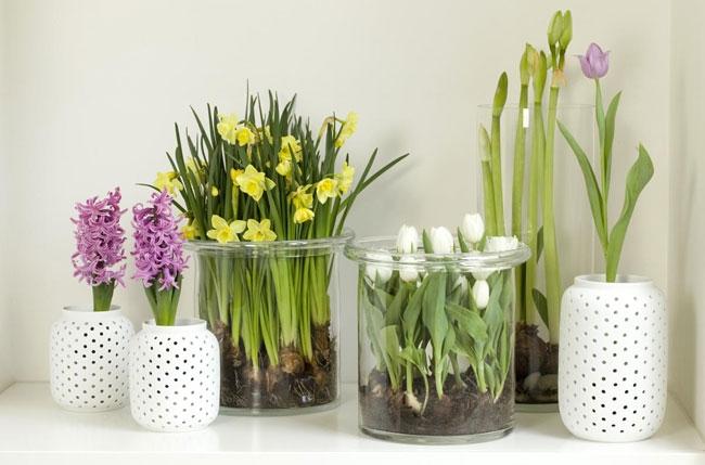 Картинки по запросу цветы выращенные в вазе