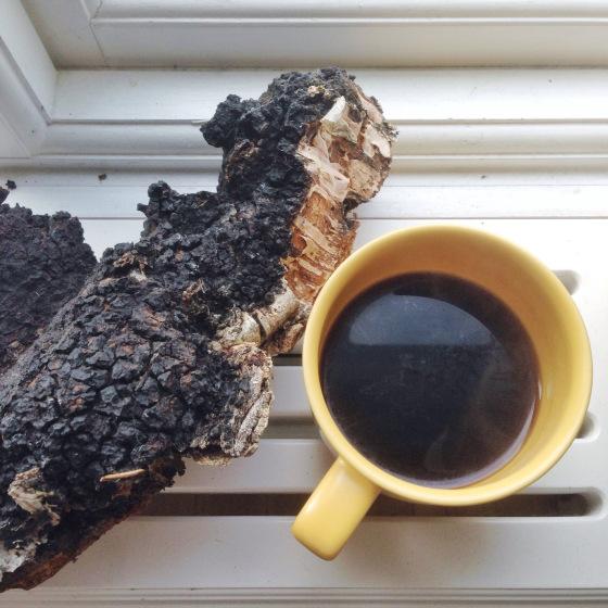 Целебный отвар гриба