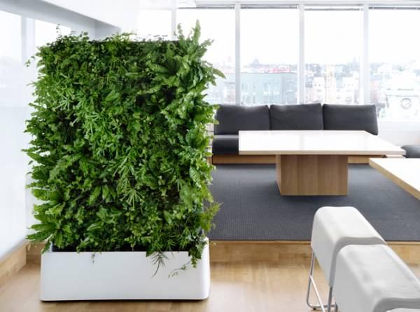 Живая стена из растений