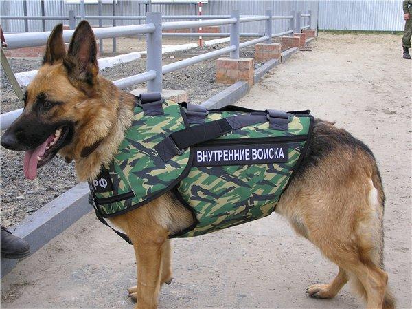 1_military_animal_01.jpg