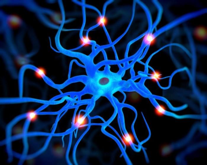 Клетки мозга из мочи.