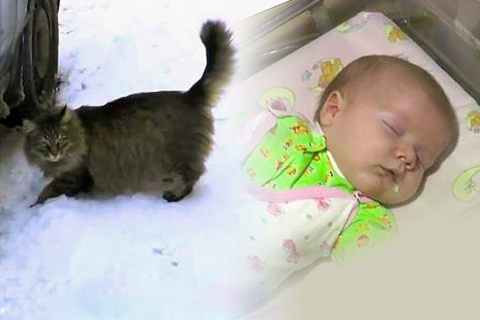 Кошка спасла младенца добро, люди, поступки