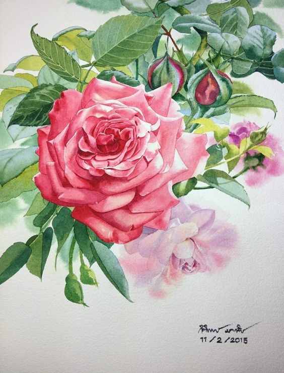 Pink rose Watercolor on paper: