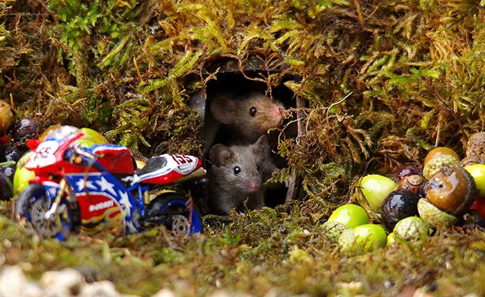 Саймону нравится снимать дикую природу, и мышки стали его любимыми героями съемки.