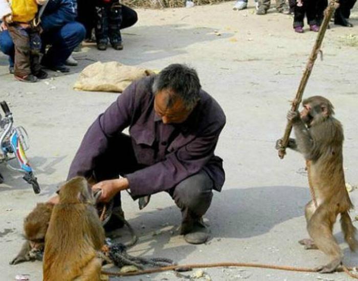 Преступная группировка обезьян. | Фото: BAOMOI.COM.