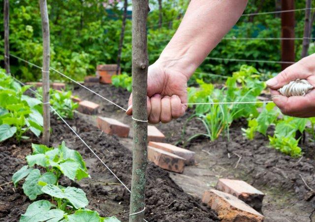 Из чего сделать опоры для подвязывания овощей