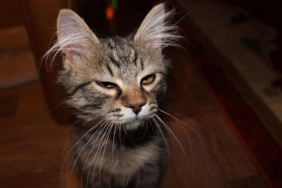 Кот подозревает