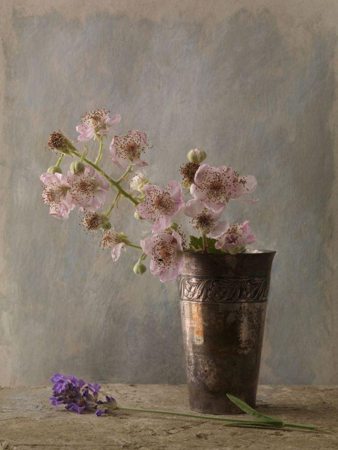 Невероятно красивые натюрморты Франсуа Жилле