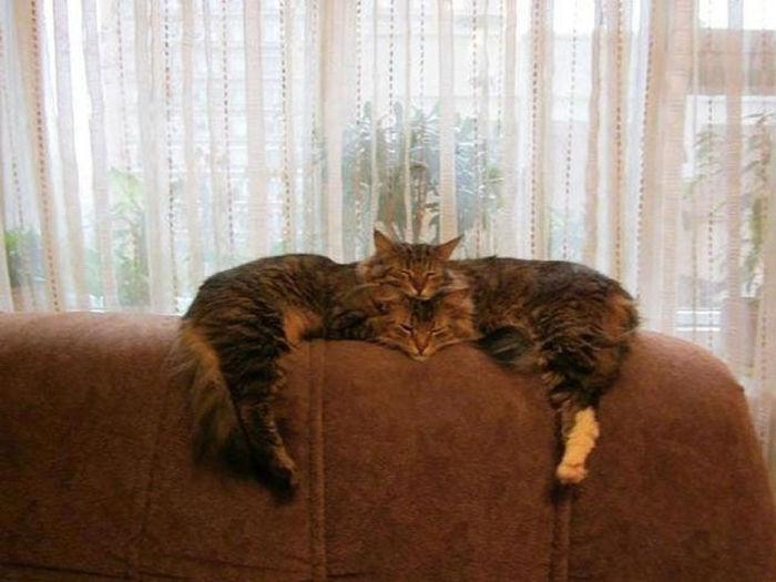 Двойной кот.