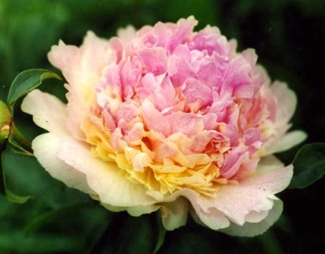Raspberry Sundae (Распберри Сандей)