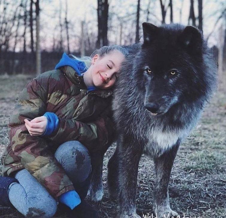 Волкособ фото с человеком