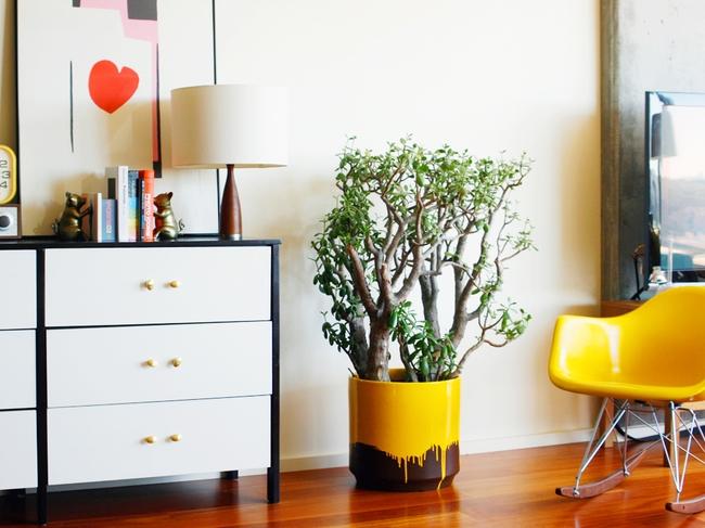 Денежное дерево - довольно привычное и очень традиционное комнатное растение, но и в любом современном интерьере оно радует глаз