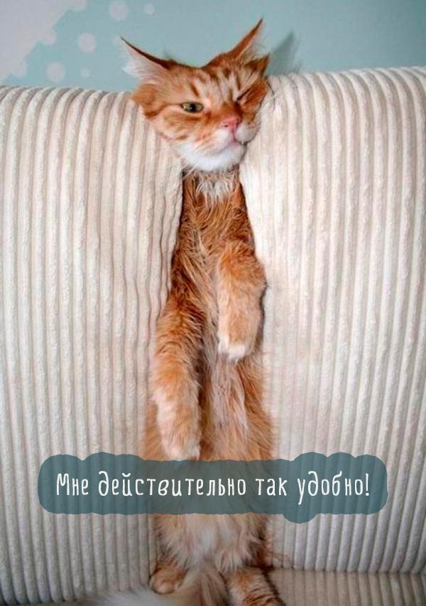 рыжий кот застрял в диване