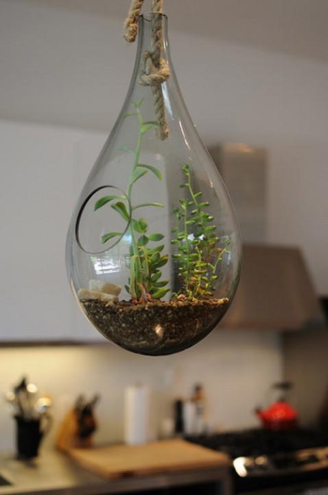 растения в домашнем интерьере