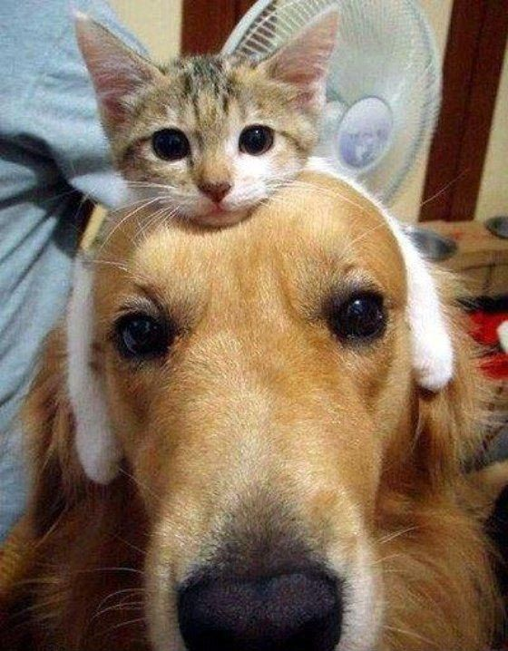 животные не знают что такое личное пространство, животные нарушающие личное пространство, животные залазят на других, животные сидят на других животных