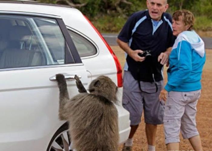 Галантная обезьянка. | Фото: Peoples.RU.