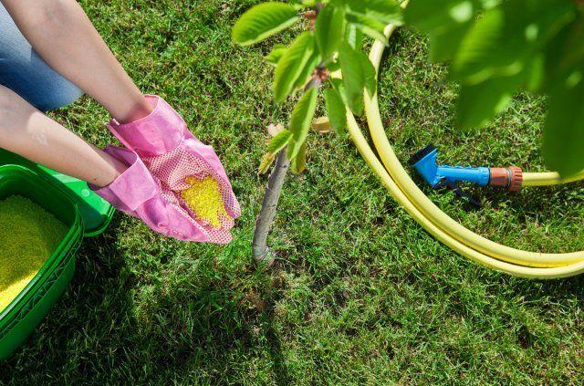 Подкормка дерева удобрениями