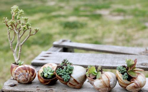 38 Потрясающих цветочных горшков