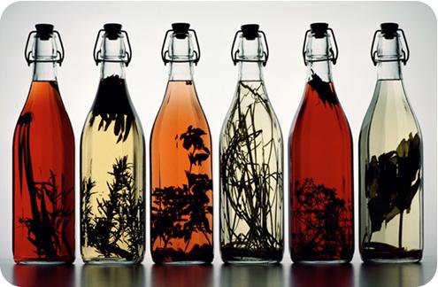 Картинки по запросу настойки лекарственных растений