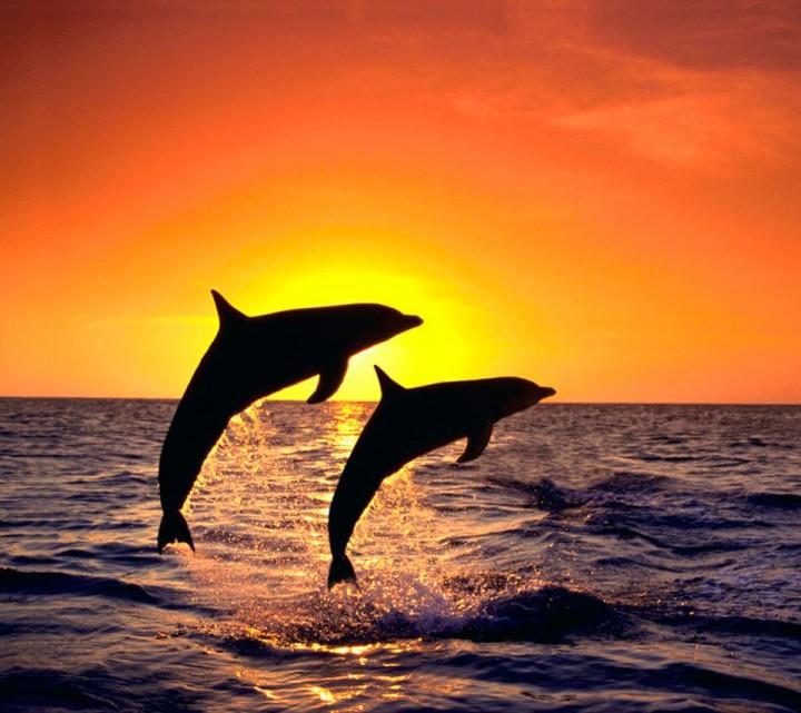 Красивые картинки с закатом и дельфинами
