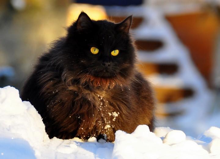 фото чёрных котят в снегу