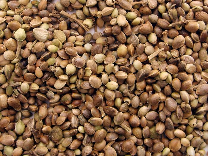 Семена китайской конопли.
