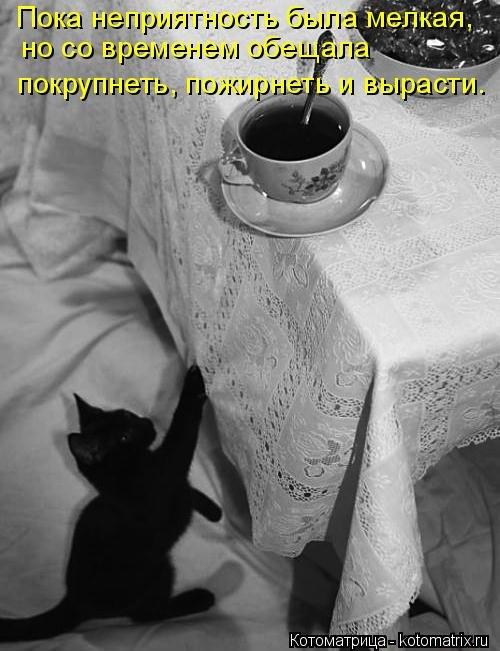Лучшая котоматрица недели (31 фото)