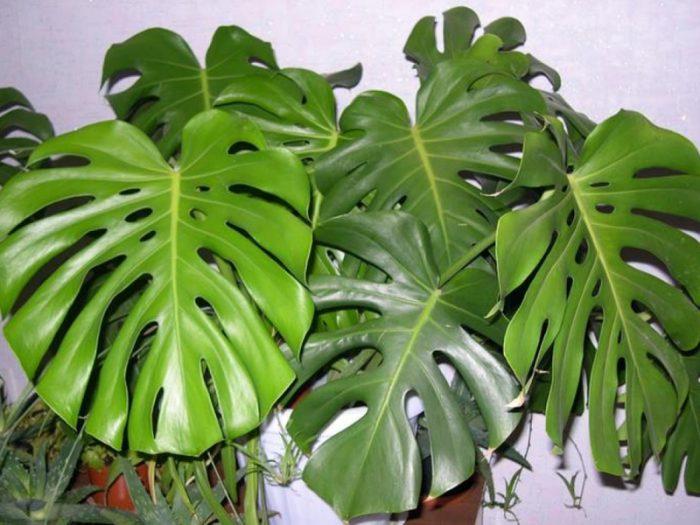 Растения, приносящие беду