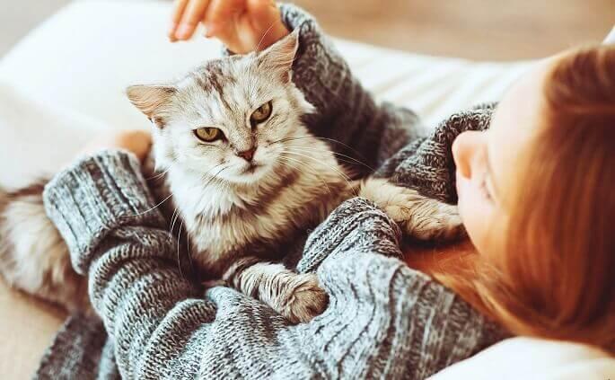 Сложнее всего будет тем, кто не хочет расставаться с любимым котейкой