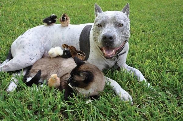 Позитивная подборка. Животные (15 фото)