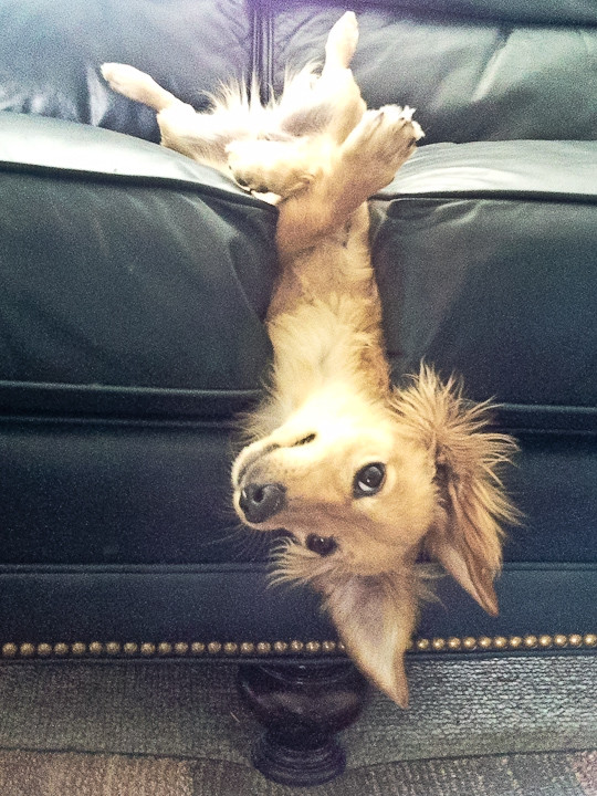 Что не так с моей собакой? животные, смешные животные, собака