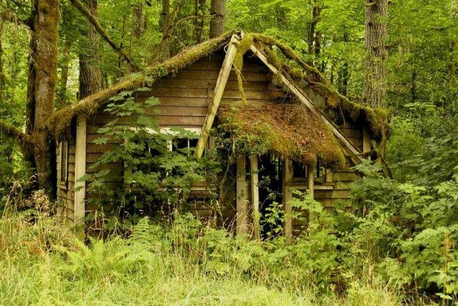 houseinwood15 Самые красивые дома в лесу