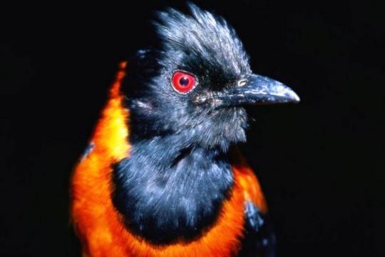 самое смешное название птицы