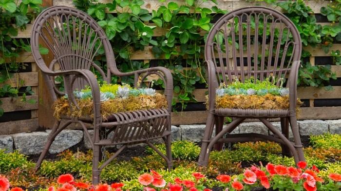 Оригинальные клумбы из стульев.
