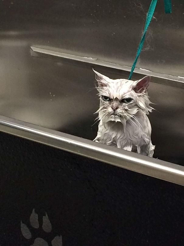 злые животные, животные в гневе, сердитые животные