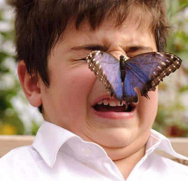 Картинки бабочки прикольные, днем станицы
