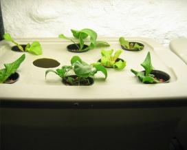 Емкости для гидропонного выращивания