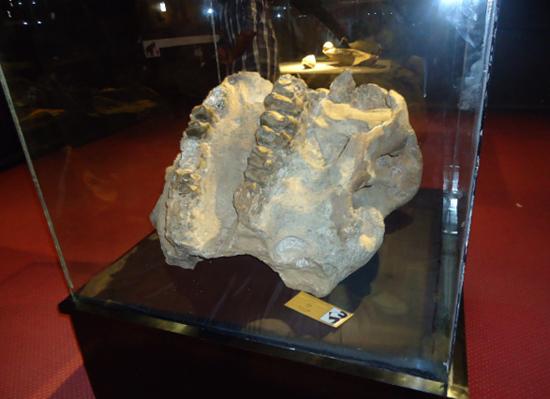 Внутри археологического музея